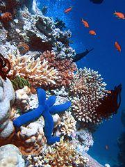 180px-blue_linckia_starfish